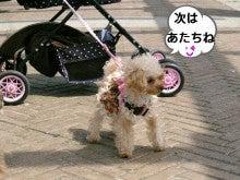 あっち★こっち★こまち♪U^ェ^U-IMGP4097.jpg