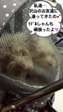 あっち★こっち★こまち♪U^ェ^U-DCIM1734.jpg