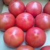 おいしいトマトちゃんの画像