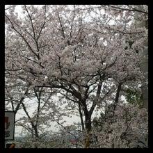 $[加東・三木発]ミディアム&カウンセラー.ヒーリングで癒しマス☆Sakuraサロン-1365084261524.jpg