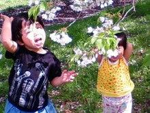 コミュニティ・ベーカリー                          風のすみかな日々-桜の下で