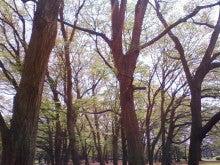 コミュニティ・ベーカリー                          風のすみかな日々-新緑