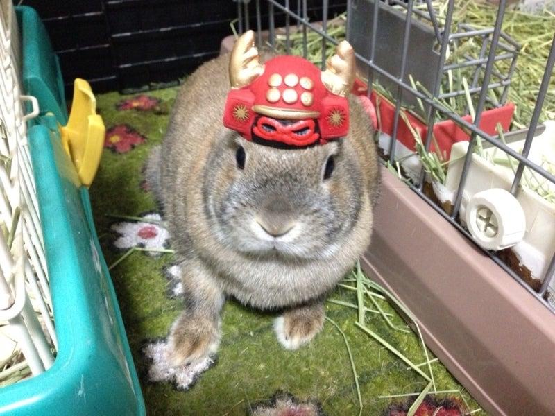 うさぎ武将シリーズ 真田幸村 Japanese kabuto on the bunny.