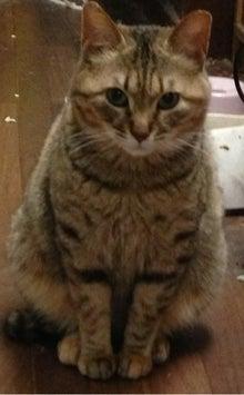 町田市置き去り猫緊急レスキュー
