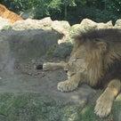 ホノルル動物園の記事より