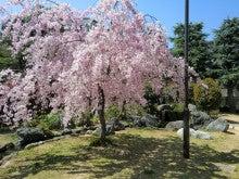赤と黒-桜井公園⑦