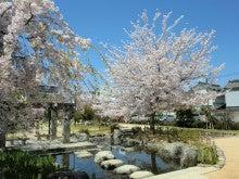 赤と黒-桜井公園④
