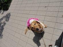 大阪鶴見区マリーを探す!わんわんのブログ