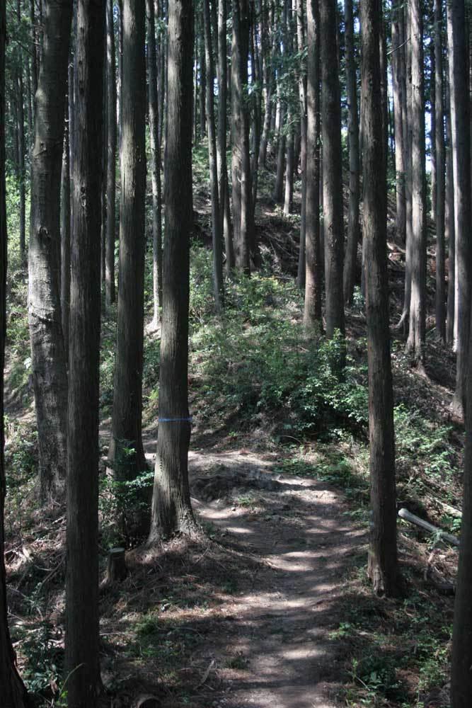 辛垣城/名郷峠から西を見ると