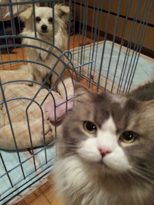 CATS&DOGS CAFE(キャッツ&ドッグスカフェ)-未設定