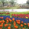 【お出掛け】国営昭和記念公園の画像