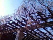 コミュニティ・ベーカリー                          風のすみかな日々-藤棚