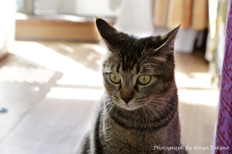 「猫の写真、撮ってます。」
