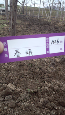 $beckの釣りバカ'農業'日誌【釣り時々Hatake】-DCF00303.jpg