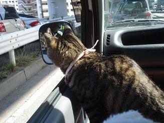 お出かけ猫 ミヨちゃん-2