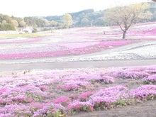 高崎市議団のブログ-箕郷・芝桜公園