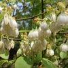春の匂いの画像