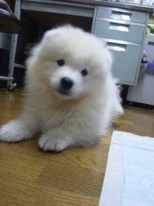 サモエド犬ラッキーのらき日記-DVC00183.jpg