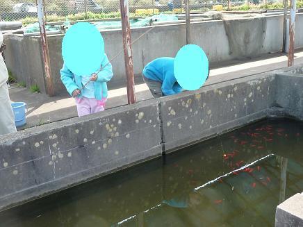 手賀沼フィッシングセンターで、ニジマス釣り | オバタリアンの! 川崎 ...