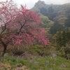 南牧村の春♫の画像