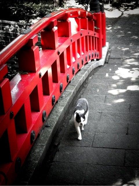 赤い色だけを残してモノクロに加工した写真を作れるアプリ Moremono