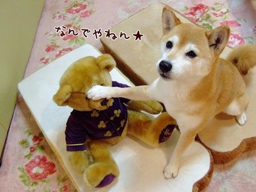 $柴犬ひかりといちご のんびり日記
