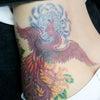 刺青★菊鳳凰(腰)カラー!の画像