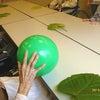色彩ボランテイア ~新緑のギフト~の画像