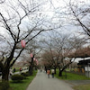 ナウ!桜前線「みちのく三大桜名所」速報の画像