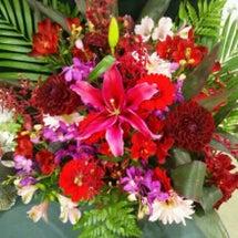 花は匂へどストロベリ…