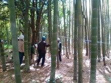 コミュニティ・ベーカリー                          風のすみかな日々-竹林2