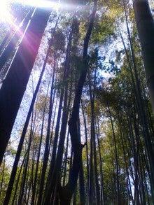 コミュニティ・ベーカリー                          風のすみかな日々-竹林1