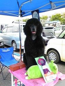= My Standard Poodles Story =-DVC00128.jpg