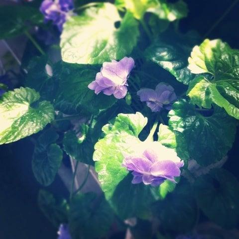 manonのお庭-image
