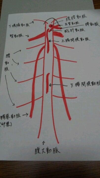 腹大動脈の分枝この記事はアメンバーさん限定です。