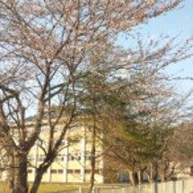 春なのに~