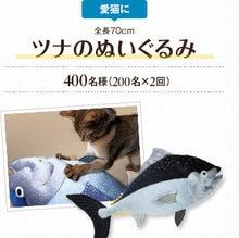 $ずれずれブログ…湘南で猫と暮らせば…