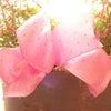 母の日にはハーブグリーンの寄せ植えを AKI FLOWERSにての画像