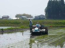 小島米店のブログ-真っ直ぐ植えられるかなぁ?