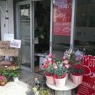 松崎周辺のお花屋さんも。の記事より