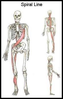 $選ばれるセラピストと理学療法士を養成する 体軸コーディネーター波田野征美~身体の軸 心の軸 治療家としての軸~