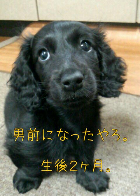 ダックス~おしゃべりなしっぽ-1368171163095.png