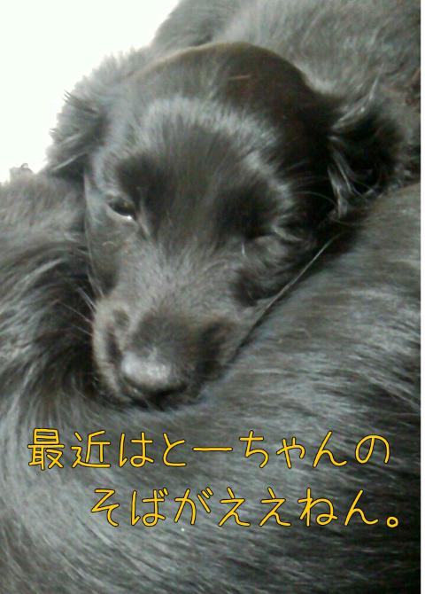 ダックス~おしゃべりなしっぽ-1368171175023.png