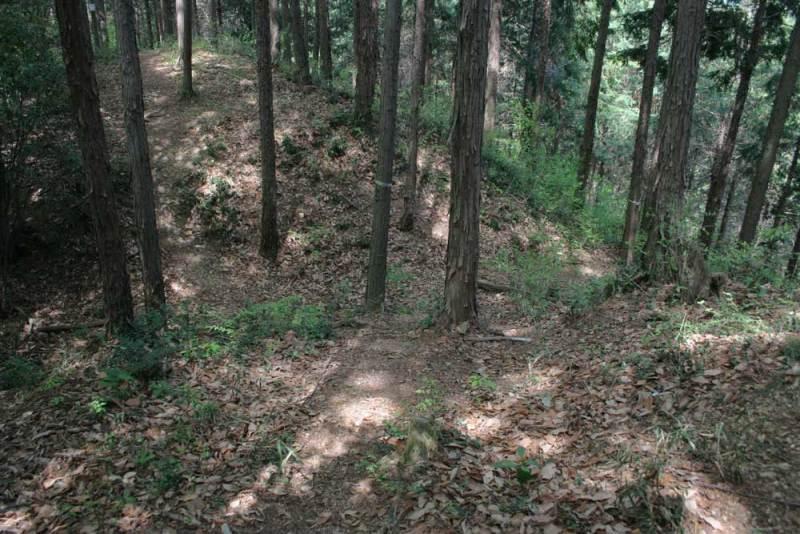 浄福寺城/稜線の堀切②