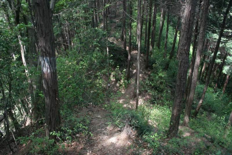 浄福寺城/稜線の堀切