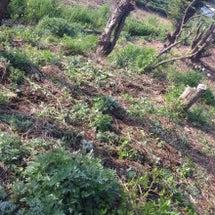 くまざわ自然農園