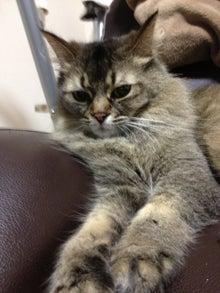$おやぢと風鈴の猫日記-image