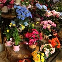 今年夏のお花