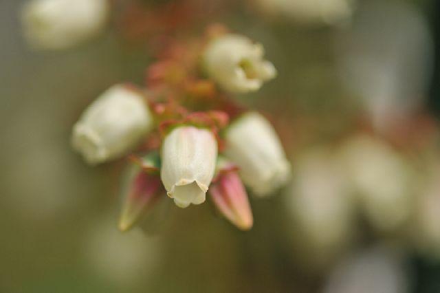 北海道の野生動植物写真-チャンドラー