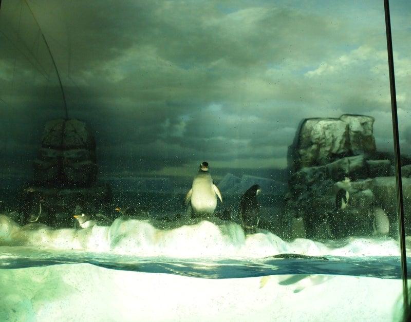 『ケセラセラ~』と、いきましょいっ!☆彡-ペンギン加工前